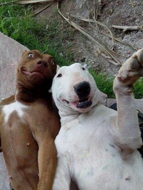 20-Dog-Selfies-0111.jpg