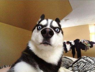 Dogs_selfie-18.jpg