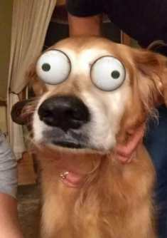 filter on dogs.jpg